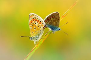 Two butterflies on a branch