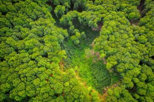 Aerial forest view